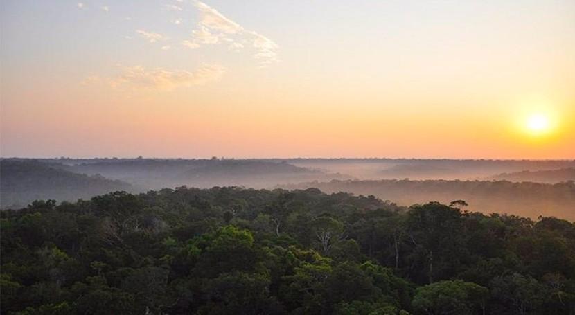 estudio indica que algunas regiones Amazonia son más resistentes al cambio climático