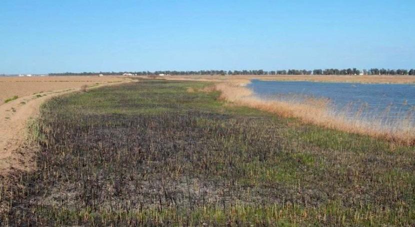 El brazo del este está situado 17 km al sur de Sevilla, donde se bifurca el cauce principal del Guadalquivir (SEO/BirdLife).