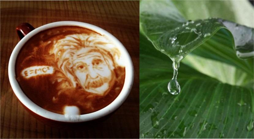 Modernización Regadíos e IVA, Café y Agua todos