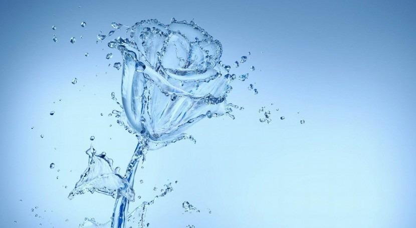 Sant Jordi, Libros y Rosas Agua