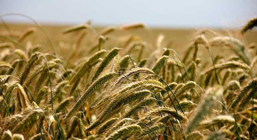 ¿Cuál es impacto real cambio climático agricultura?