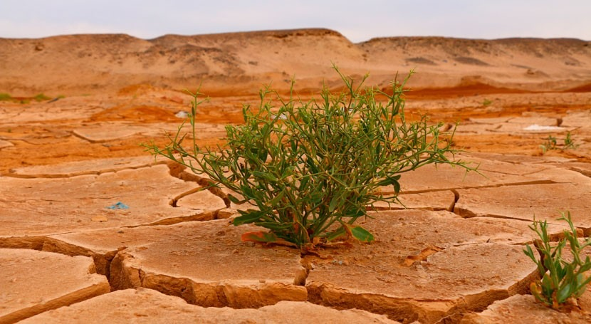 ¿Cumple mundo compromisos climáticos?
