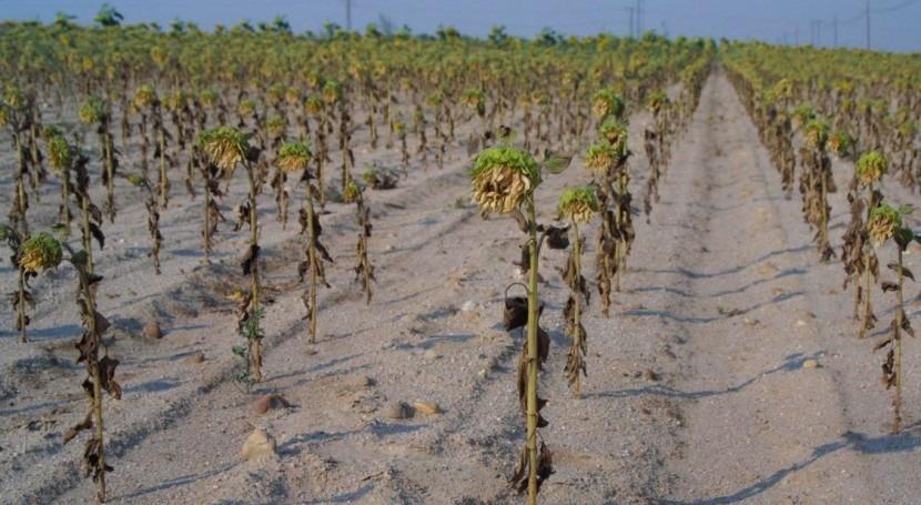 cambio climático amenaza seguridad alimentaria