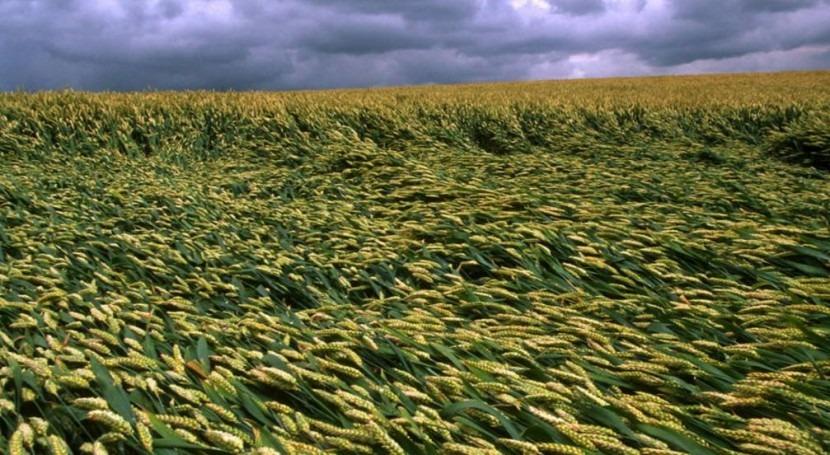 cambio climático y tu alimentación: 10 datos que deberías conocer