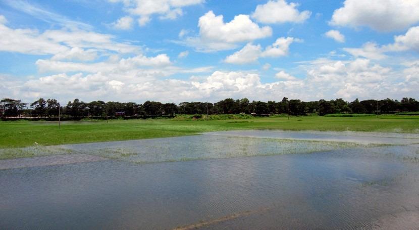 """investigación, algunos cultivos podrían tolerar inundaciones """"imitando"""" al arroz"""