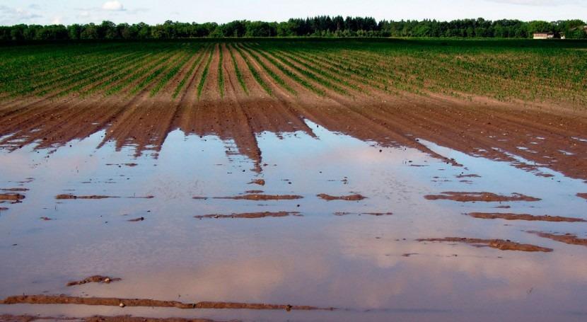 Regantes Cartagena consideran zona catastrófica parcelas afectadas lluvias