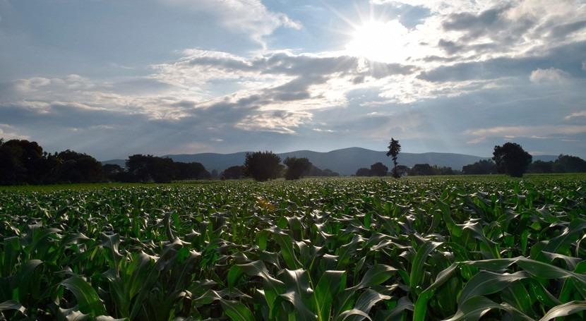 investigación desvela grandes campos cultivo mayas localizados humedales México