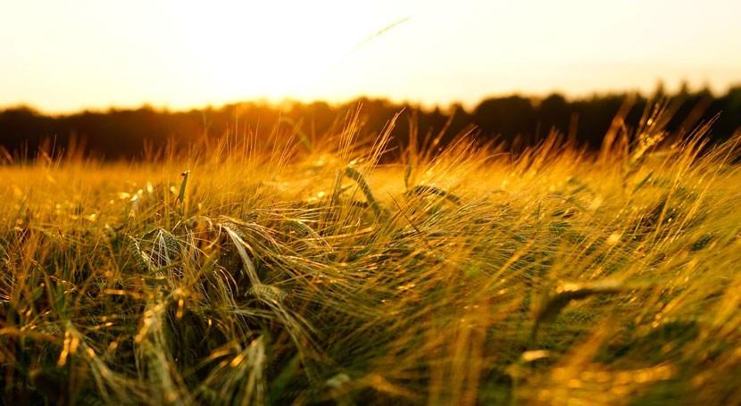suministro cerveza, peligro sequías y cambio climático