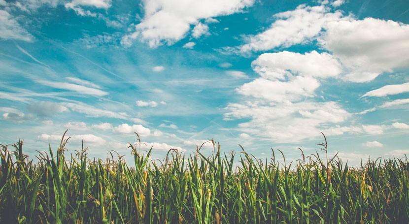 maíz, capaz hacer frente climas futuros través mejor eficiencia uso agua