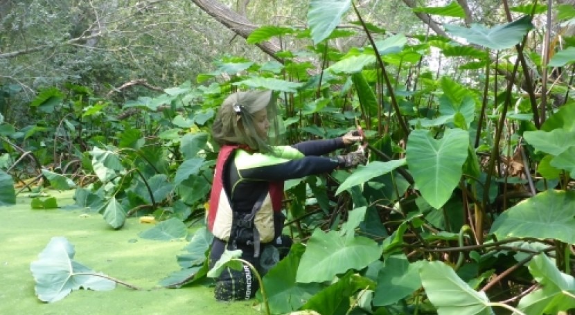 CHE finaliza campaña 2020 control plaga caracol manzana Ebro Tarragona