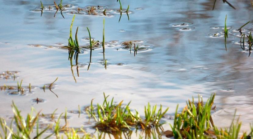 fuentes aguas subterráneas sirvieron salvavidas primeras migraciones humanas