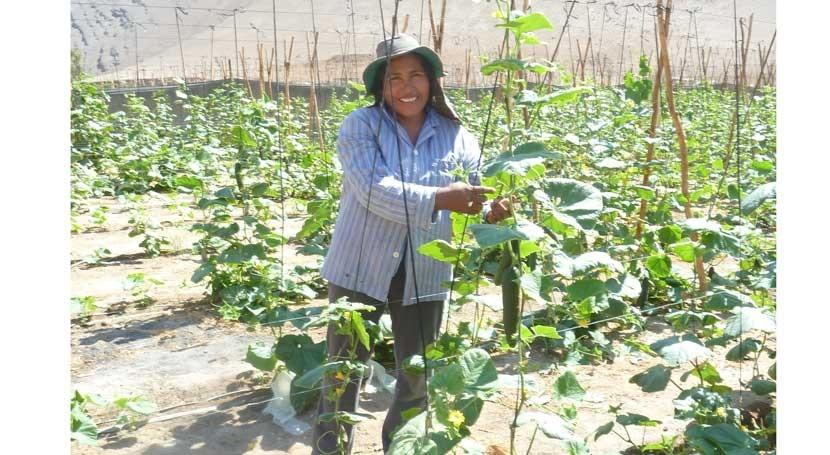 agricultores chilenos podrán presentar proyectos riego concurso CNR
