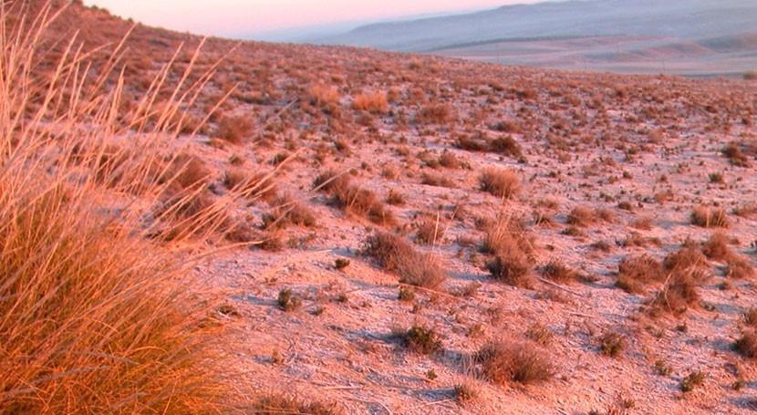 interacción plantas se ve afectada variación clima seco y húmedo
