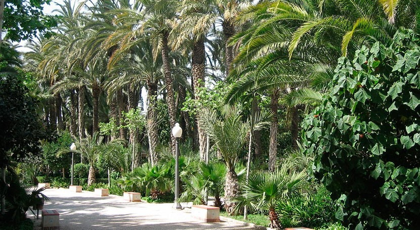 ¿Qué relación tiene sequía caída palmeras Elche?