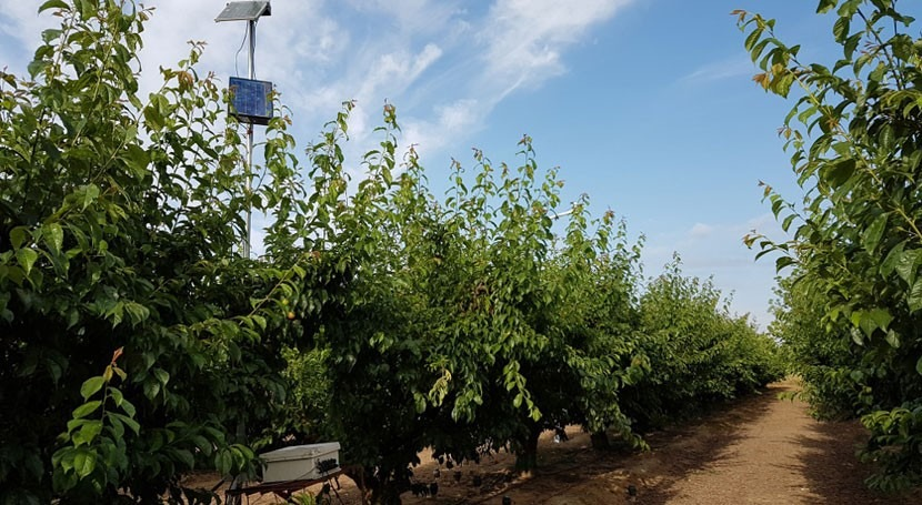 nueva plataforma web automatizará riego cultivos durante campaña completa