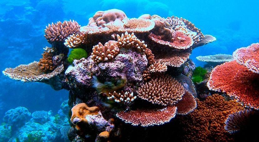 Gran Barrera Coral australiana, excluida informe cambio climático UNESCO