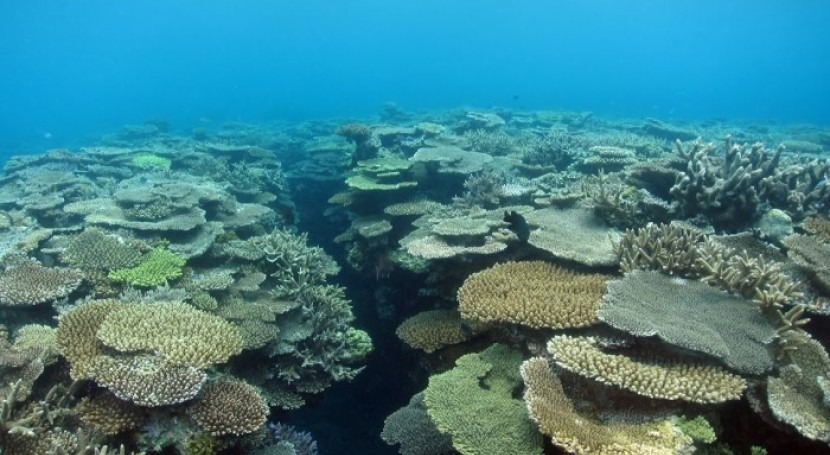 corales responsables formar arrecifes, fuerte descenso