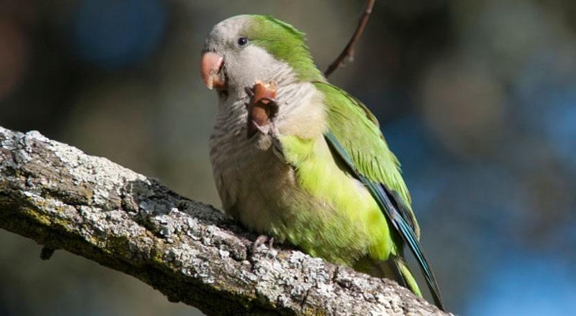 especies exóticas invasoras: amenaza biodiversidad española