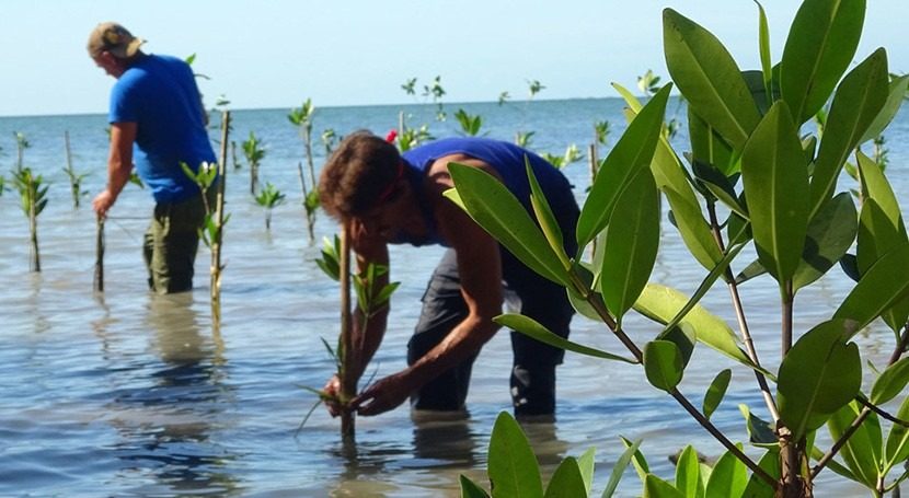 Cuba restaura manglares asistencia PNUD
