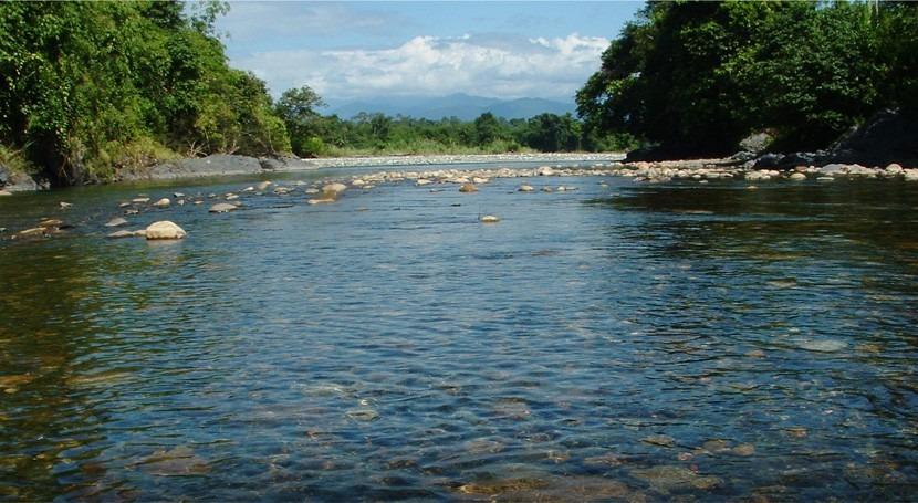 áreas protegidas son insuficientes preservar diversidad peces toda Amazonía