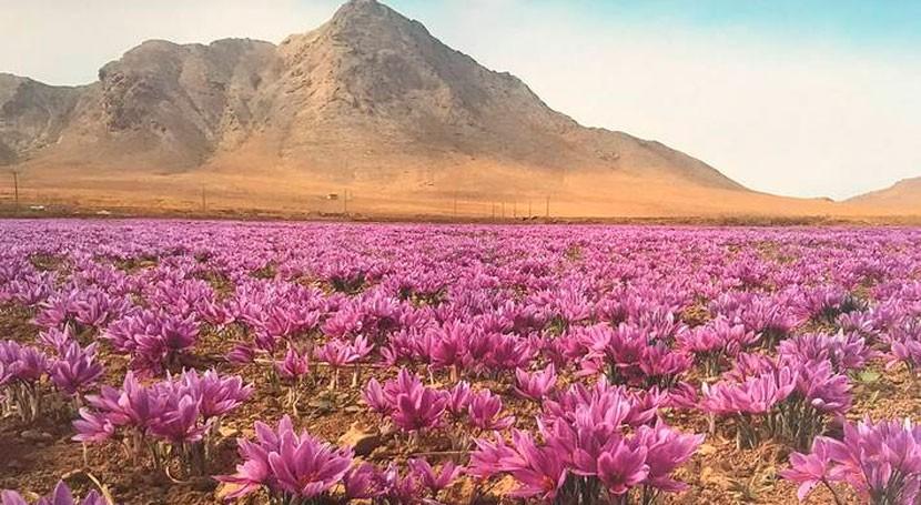 Nuevos sistemas agrícolas designados patrimonio agrícola mundial Irán, Marruecos y España