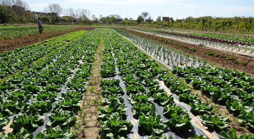 contaminación hortalizas podría no tener nada que ver agua riego