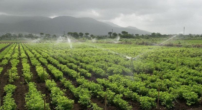 ¿Cuánta agua se utiliza irrigación?