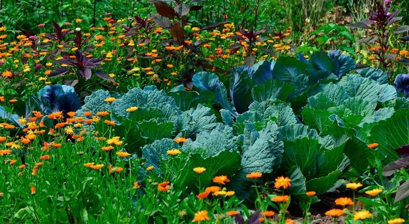 conocimiento escasez agua y cambio climático, clave entender cultivos