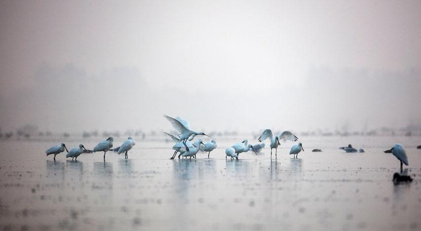 República Corea designa como sitio Ramsar humedal Daebudo Tidal Flat