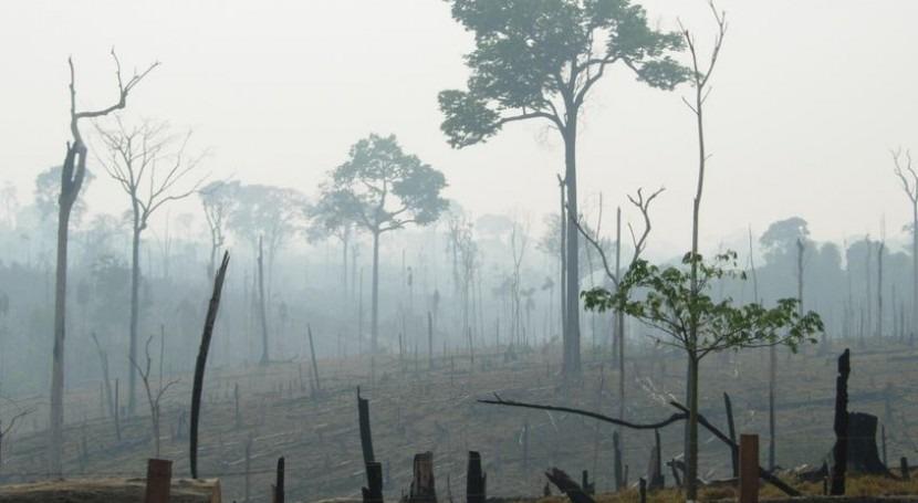 Un tercio de la deforestación global del bosque tropical ocurre en el Amazonas brasileño (Dicyt).