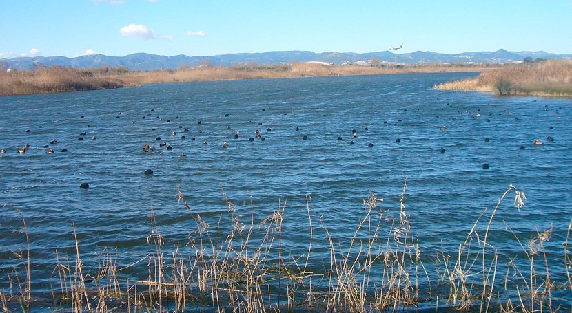 Más 90.000 firmas proteger aves Delta Llobregat