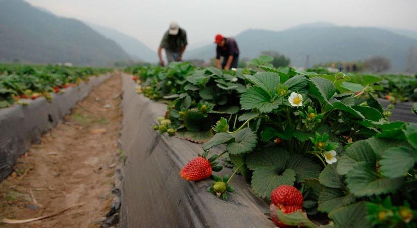Latinoamérica: 67 millones afectados década desastres sector agrícola