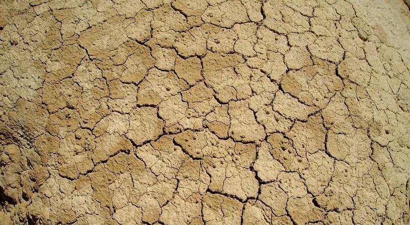 Día Mundial Desertificación, flagelo que provoca hambre y pobreza