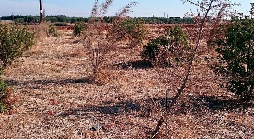 desertificación afecta casi mitad España