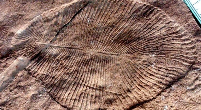 Luz solar y nutrientes aguas poco profundas Proterozoico, claves evolución