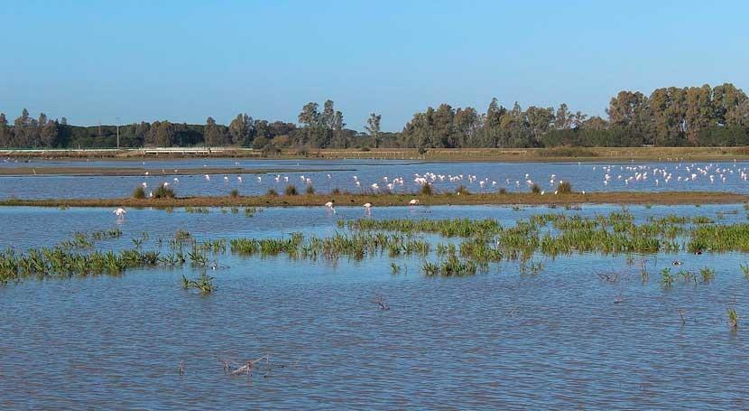 CHG reforzará control tres masas acuífero Doñana
