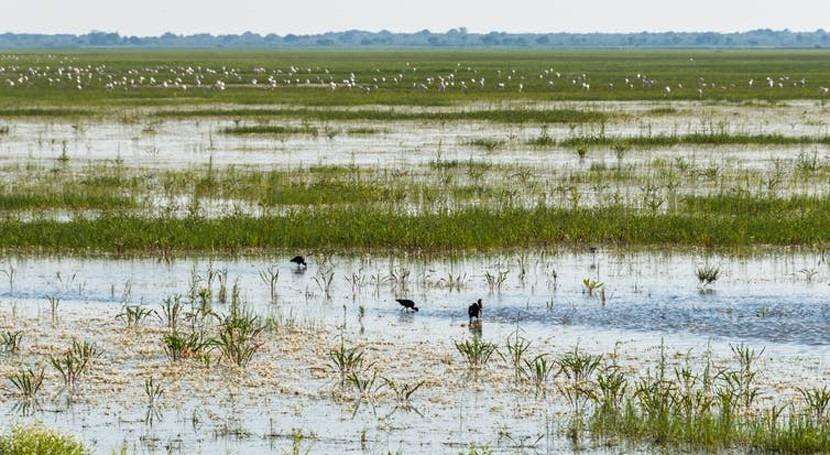 ¿Está Doñana enferma? Buscamos síntomas ratones y cangrejos