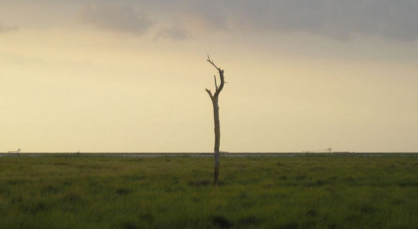 agricultores reclaman que se pare cierre pozos Doñana