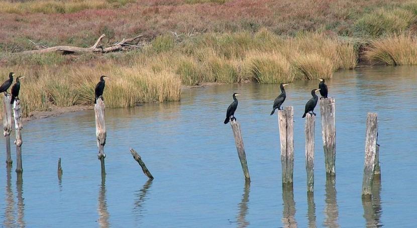 SEPRONA coloca contadores pozos fincas entorno Doñana