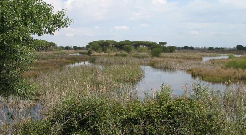 Censadas 750.000 aves acuáticas 96 especies diferentes humedales Andalucía