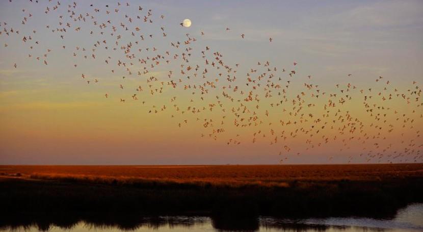 Doñana alerta: estado ecológico marisma pone peligro aves