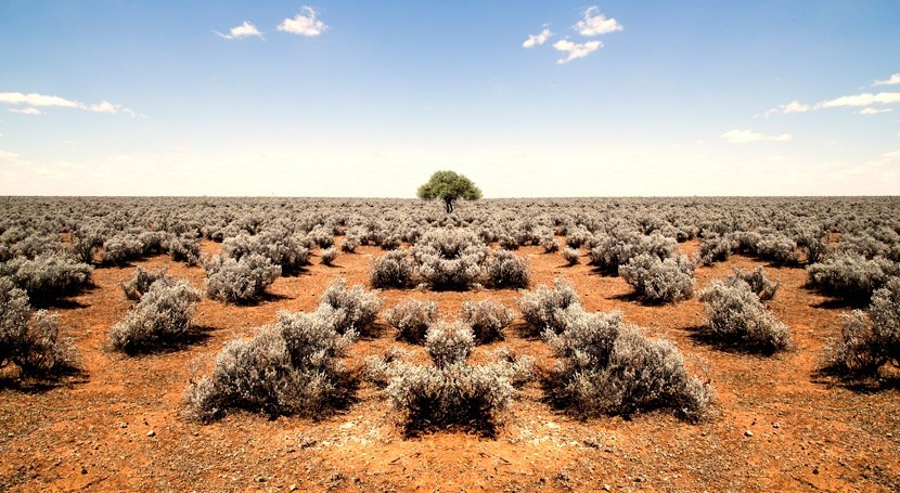 cambio climático ocasiona aumento generalizado aridez ecosistemas terrestres
