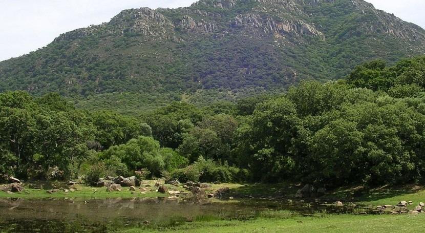 Bosque mediterráneo (Wikipedia/CC).