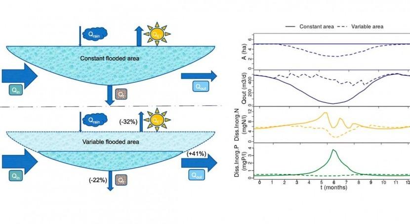 Eficiencia depuradora humedales, régimen inundación y meteorología