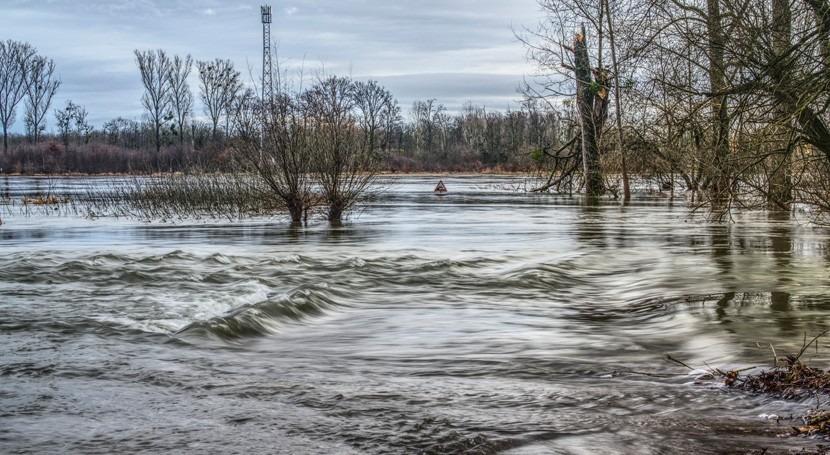 año diluvio: futuro Margaret Atwood