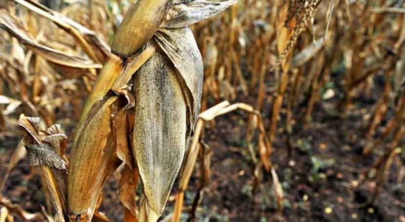 Niño obliga al sector agrario latinoamericano activar prevención y gestión riesgos