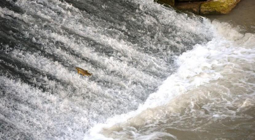 CHS colocará escala peces azud Molinos río Segura Murcia
