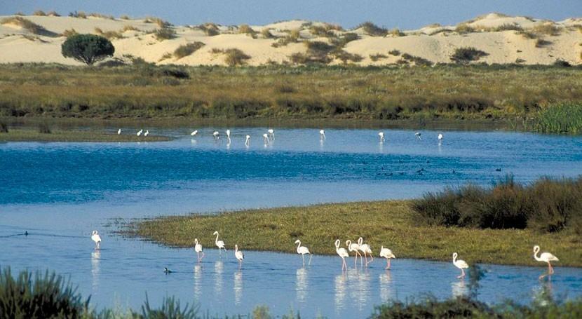 Andalucía ve necesario trasvase cumplir exigencias europeas Doñana