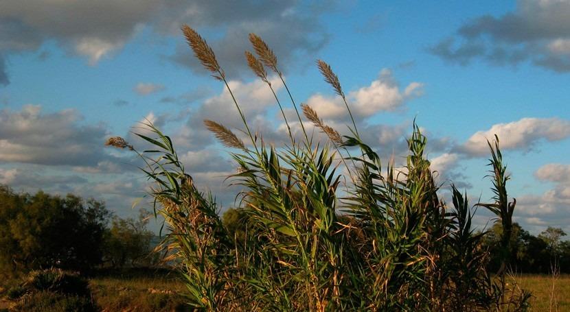 España vive 2021 primavera más seca últimos quince años