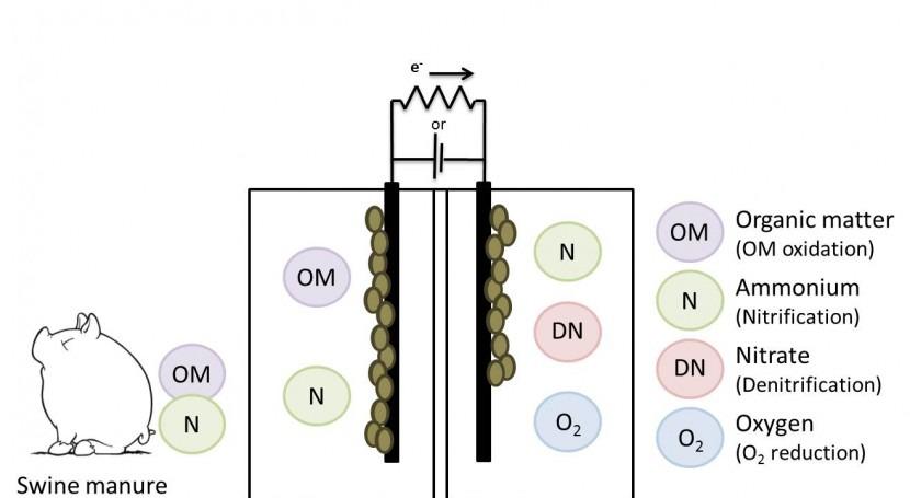 tesis LEQUIA aplica éxito sistemas bioelectroquímicos al tratamiento purines